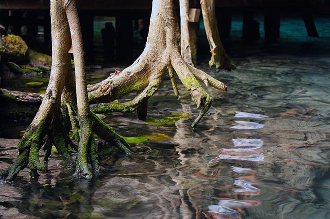 Vacances_Cenote.jpg