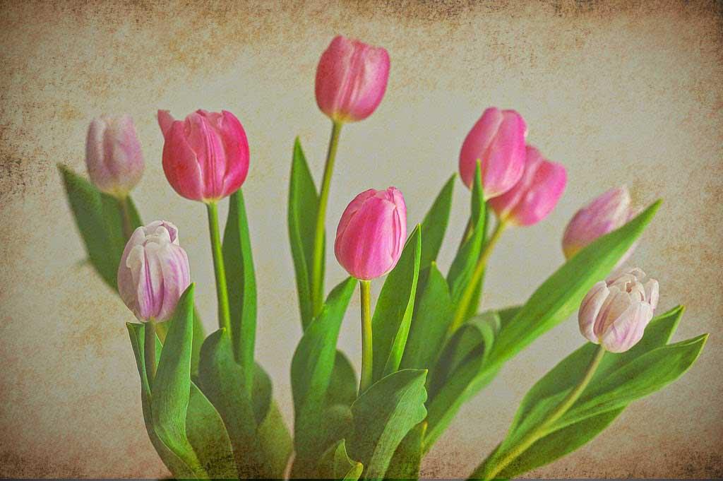 texture flowers.jpg