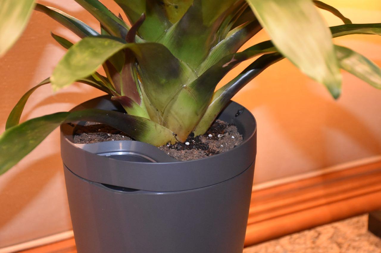 Parrot Pot 2 (1).jpg