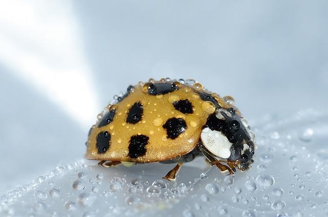 beetles-994211_640.jpg