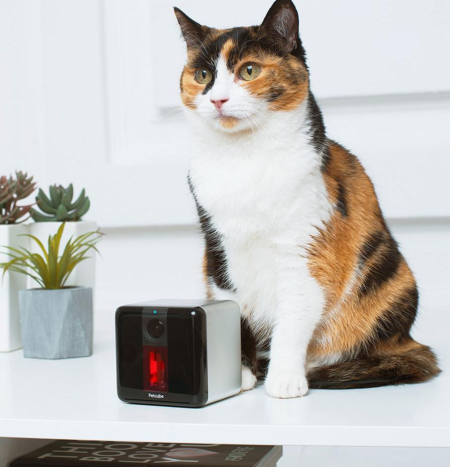 cube interactif Petcube Play Wi-Fi HD avec caméra pour animal de compagnie
