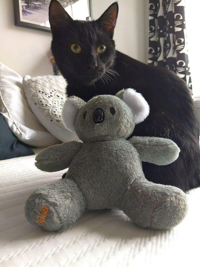 Matelas Koala chat koala