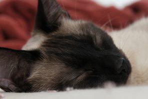 Chat endormi; photo par Allison Mathey sur Flickr.