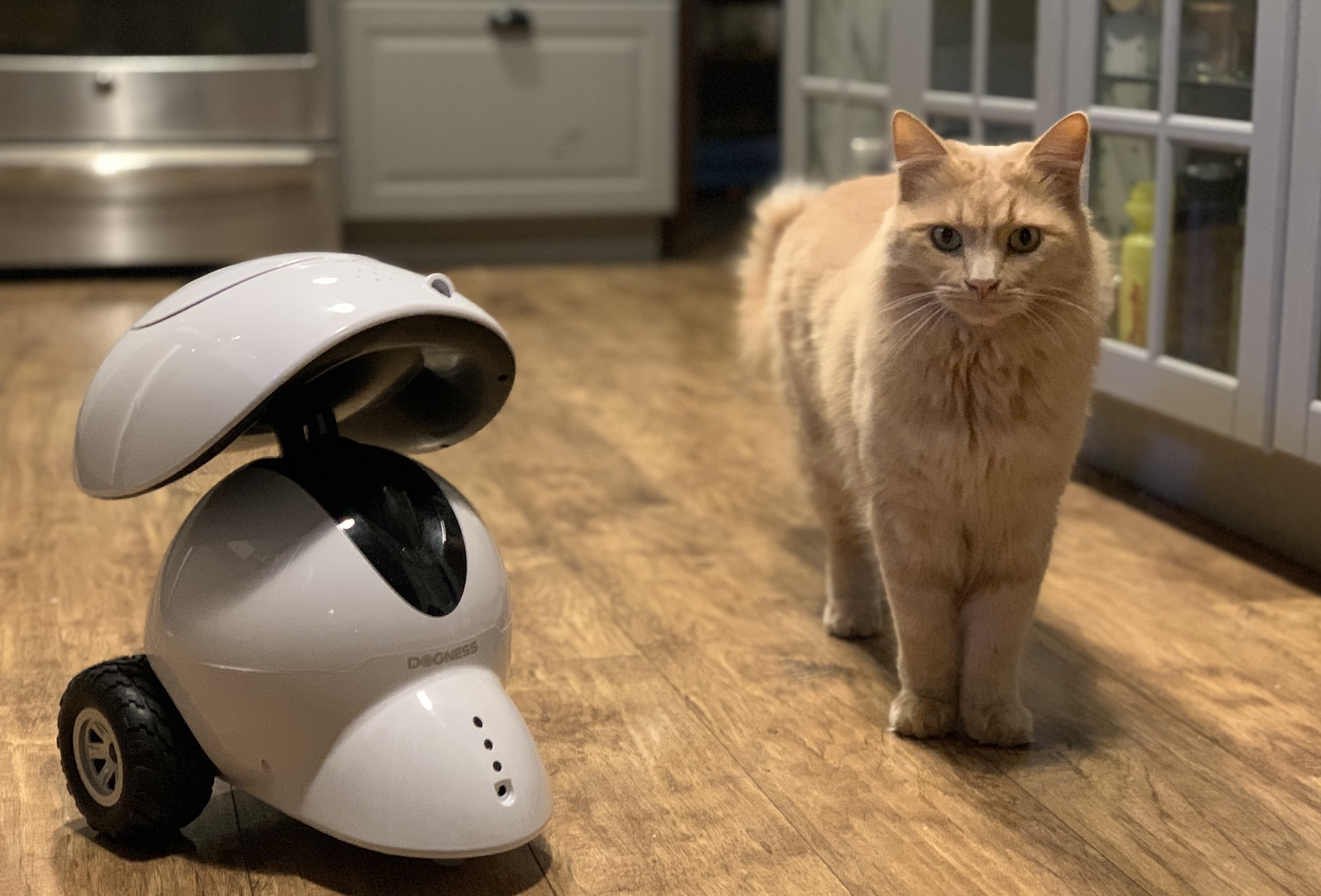 robot intelligent distributeur de récompenses iPet de Dogness