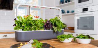 Un avant-goût du printemps avec un jardin intérieur