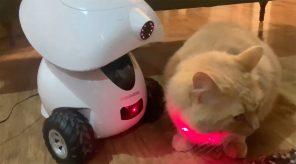 Un chat assis sur une table, avec le robot intelligent distributeur de gâteries iPet de Dogness à gauche; le robot envoie un pointeur laser sur le chat et celui-ci regarde du côté droit de l'image.