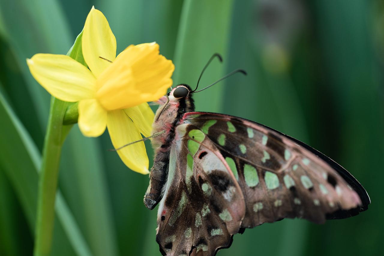 Papillon macrophotographie - article conseils photo 101 (c) Stéphane Vaillancourt