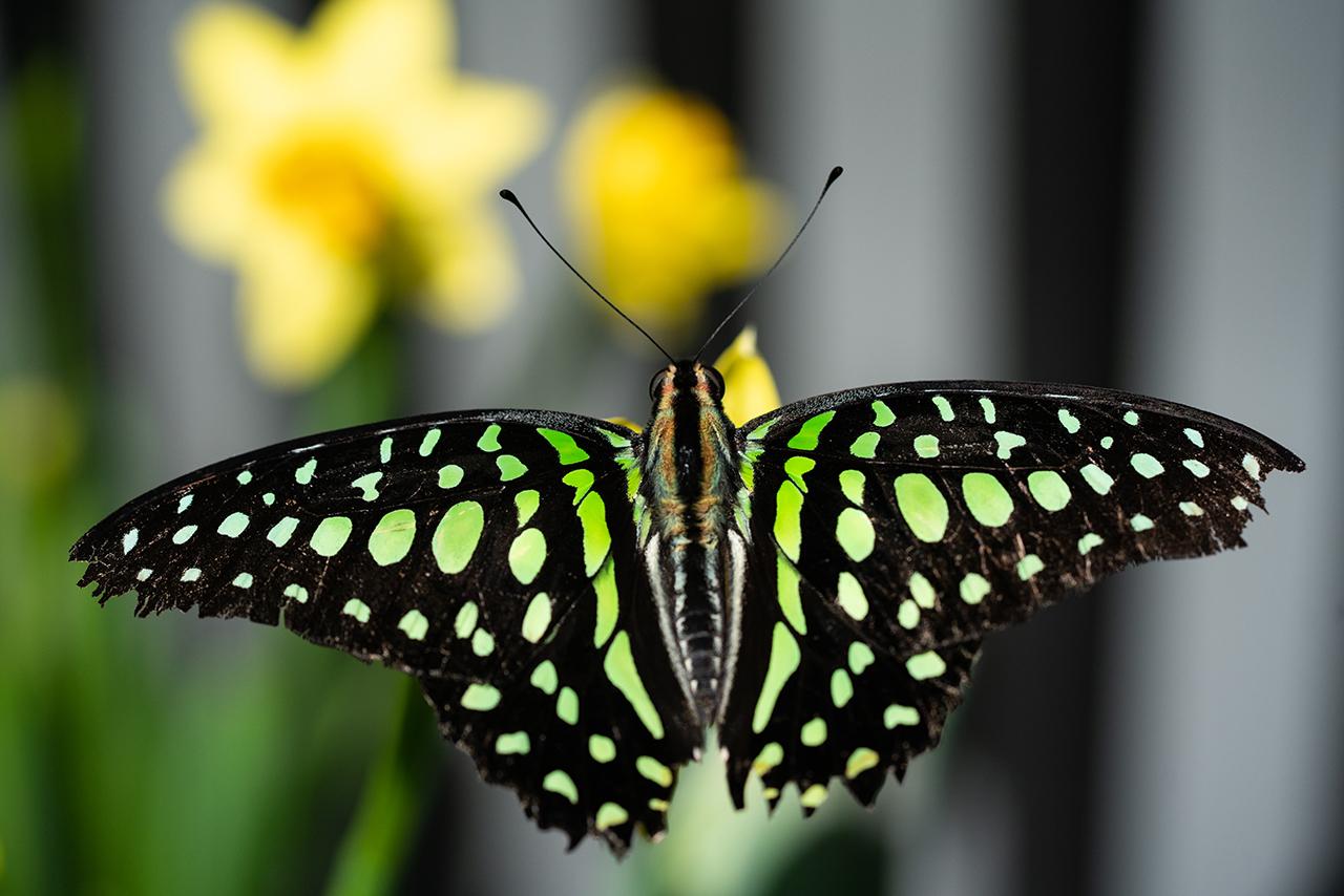 Papillon macrophotographie pour article conseils photo 101 (c) Stéphane Vaillancourt